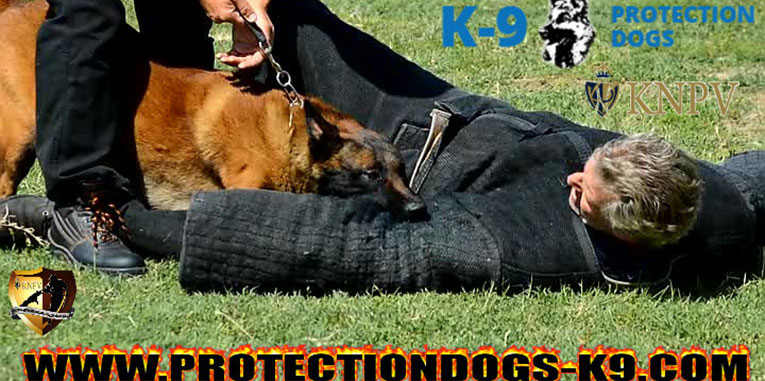 KNPV police dogs personal protection dogs family protection dogs