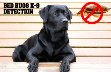 BED BUGS K-9 DETECTION