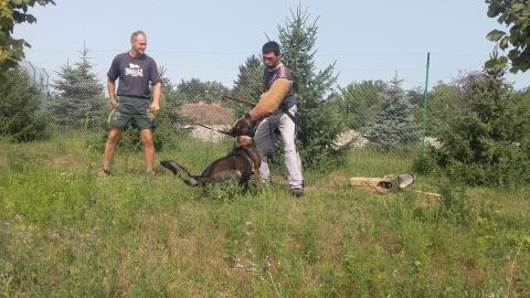 Psi za čuvanje raznih objekata, vikendica, ribnjaka, auto placeva, ...