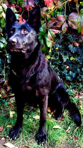Dualni Policijski Pas i Pas za Porodičnu i Ličnu zastitu