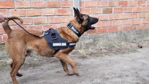 Dogs for Personal and Family Protection