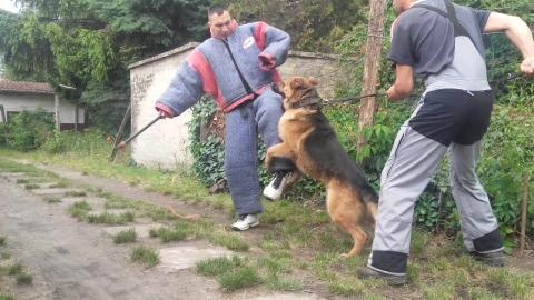 protectiondogs-k9Dogs for personal and family protection
