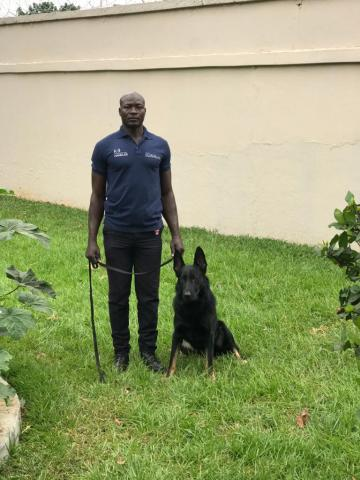 knpv protection and police dogs for sale