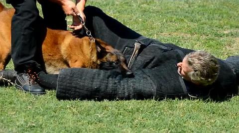 Training dogs for police purposes Obuka pasa za policijske namene